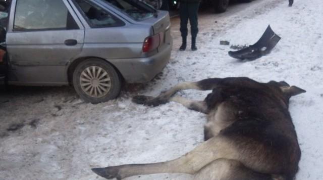 ВСмоленской области иностранная машина сбила лося: два человека пострадали