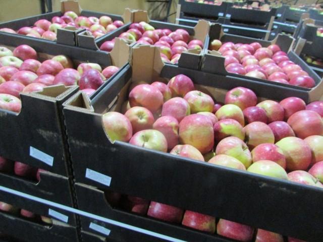 ВБрянск попытались ввезти польские яблоки ввиде белорусских
