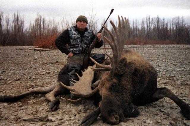 3-х лосей убили браконьеры Смоленской области
