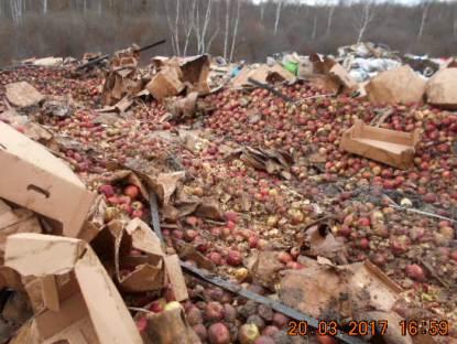 Наполигоне ТБО вСмоленской области захоронили яблоки