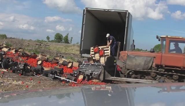 ВБрянской области 64 тонны польских яблок вдавили вземлю