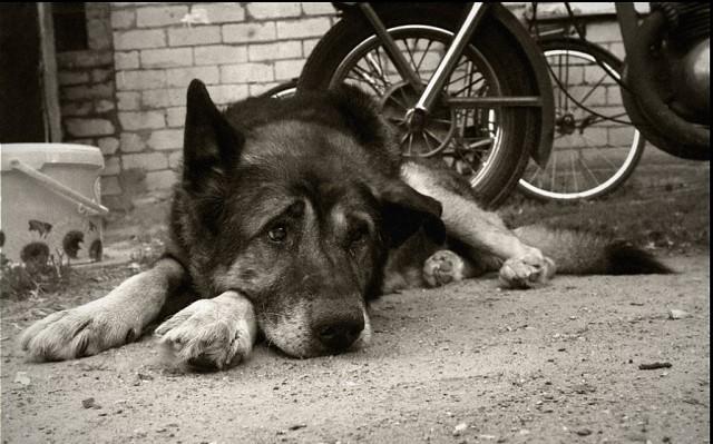 Чиновницу изСмоленской области обвиняют виздевательстве над собакой
