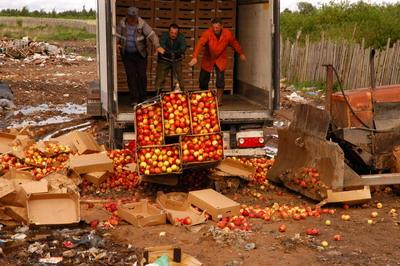 ВРудне уничтожили неменее 80 тонн яблок