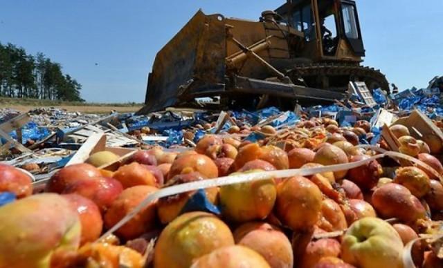 ВСмоленской области уничтожили больше 80 тонн санкционных яблок