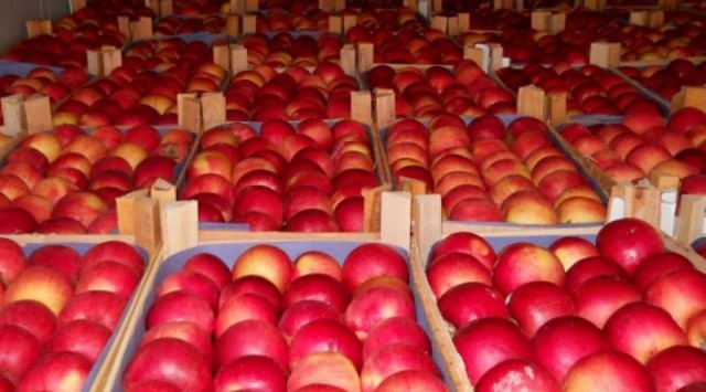 ВКалужской области бульдозером раздавили 20 тонн санкционных яблок