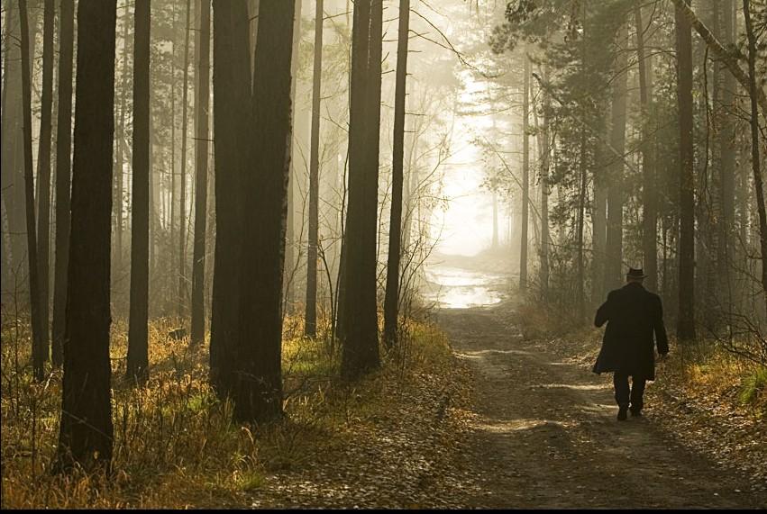 картинка уходящий лес