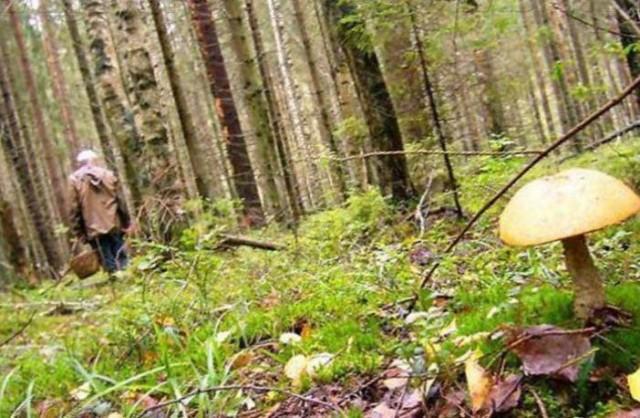 У Верховинському районі рятувальники шукали грибника