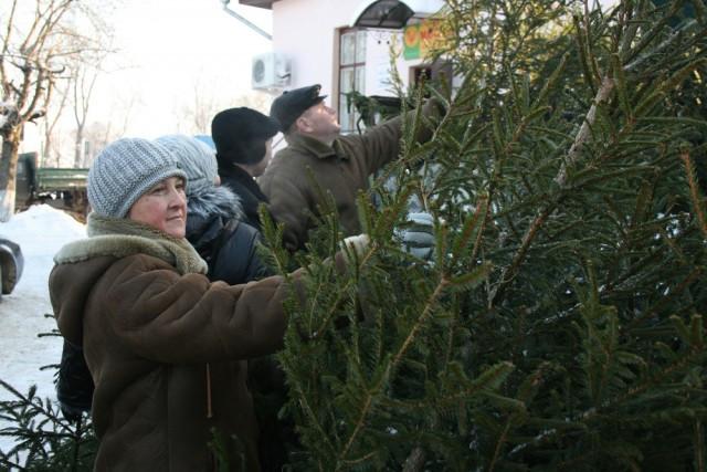 ВСмоленске определены места торговли новогодними елями
