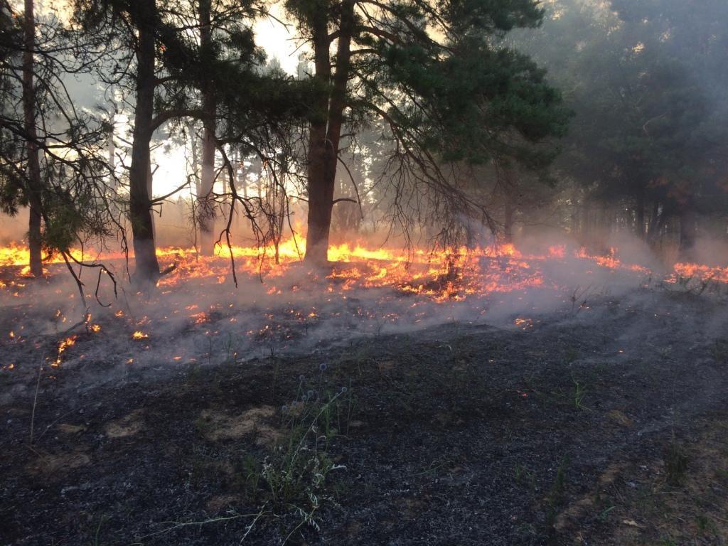 уже много лес после низового пожара фото легко
