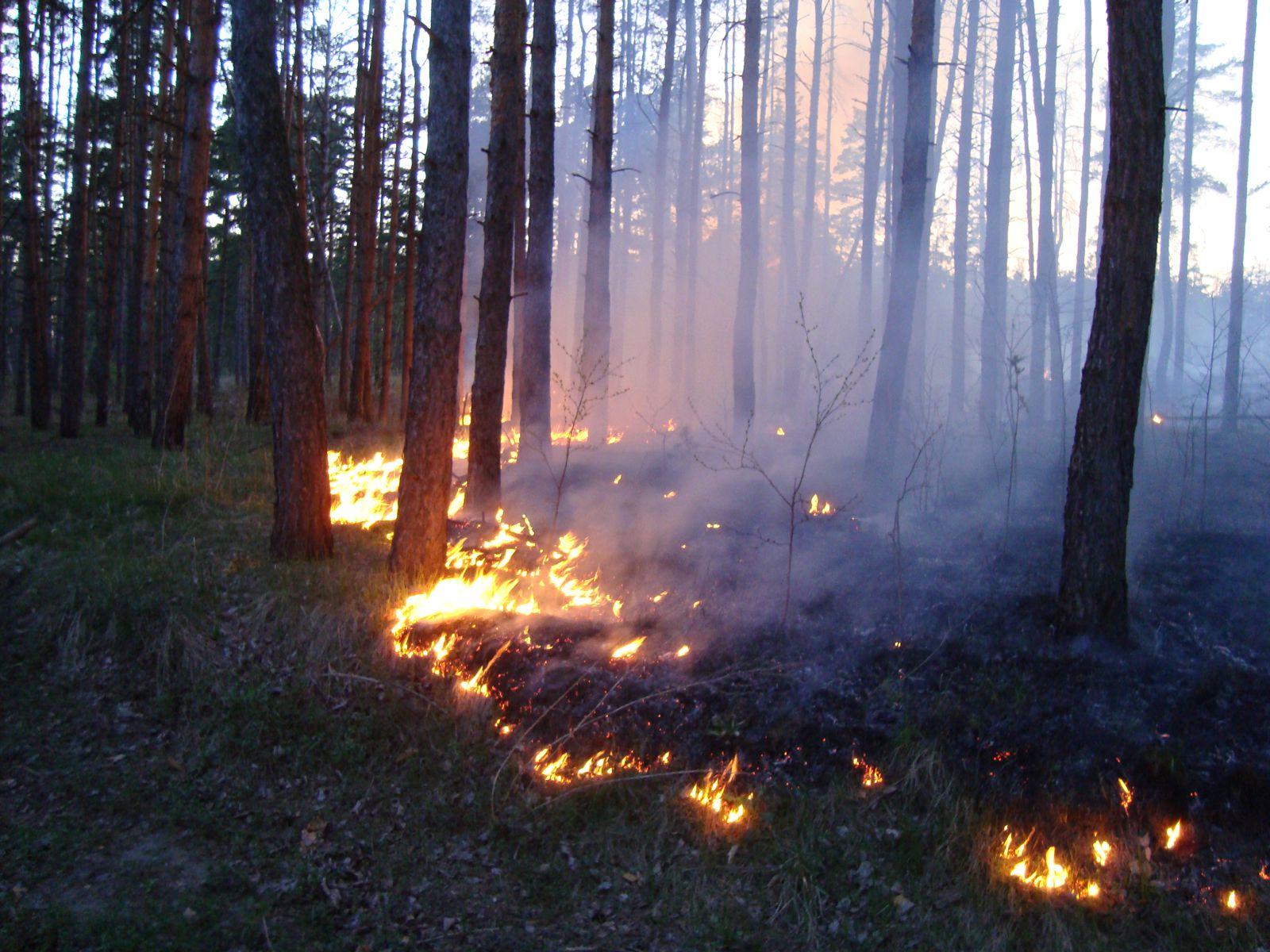 Пожары леса картинки фото